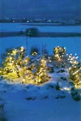 Scituate Christmas Garden
