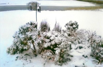 Scituate Garden in the snow